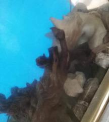 Akvarium za ribi