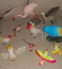 Kolekcija ptici