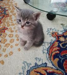 Se podaruvaat macinja